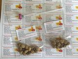 Nasturtium, Tropaeolum majus seeds 1g BUY ONE GET ONE FREE = 2g of seeds